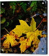 Leaves In Still Shallows Acrylic Print