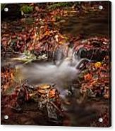 Leaves In The Creek Acrylic Print