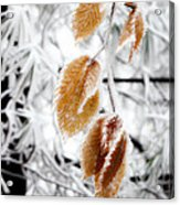 Leaves In The Frost Acrylic Print