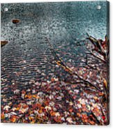 Leaves In The Lake Acrylic Print