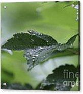 Leaves In The Rain Acrylic Print