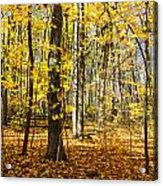 Leaves In The Woods Acrylic Print