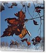 Leaves Of Fall Acrylic Print