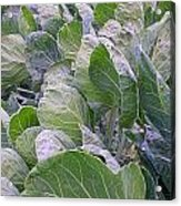 Leaves Of Green Acrylic Print