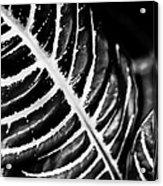 Leaves Of Life Acrylic Print
