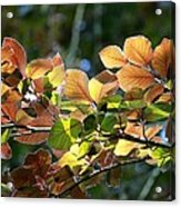 Leaves Of Light Acrylic Print