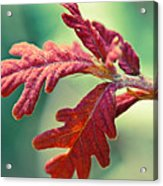 Leaves Of Red Acrylic Print