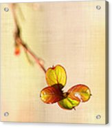 Leaves On Linen Acrylic Print