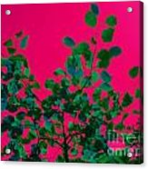 Leaves On Pink Back Lit Sky Abstract Acrylic Print