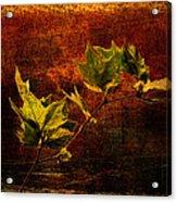 Leaves On Texture Acrylic Print