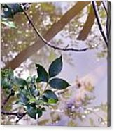 Leaves With Reflection Acrylic Print