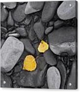 Leaves With Rocks Acrylic Print