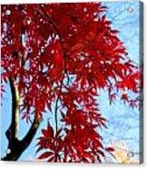 Leaves0591 Acrylic Print