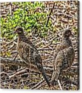 Left And Right Acrylic Print