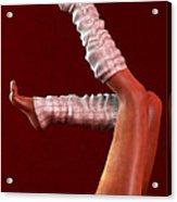 Legs II... Acrylic Print