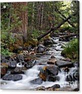 Lehman Creek In Great Basin National Park Acrylic Print