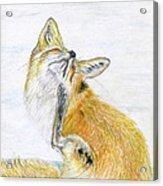 Leisure Fox Acrylic Print