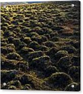 Lemmings Acrylic Print by Aaron Bedell