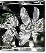 Lemon Blossoms Acrylic Print