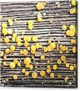 Lemon Drops Acrylic Print