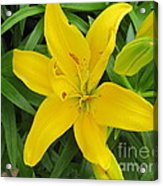 Lemon Lily Acrylic Print