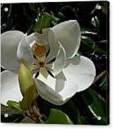 Lemon Magnolia Acrylic Print