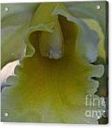Lemon Ruffles Acrylic Print