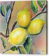 Lemon Tree Acrylic Print