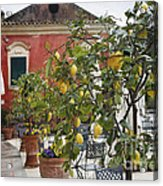 Lemon Trees On A Villa Terrace Acrylic Print by George Oze