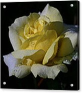 Lemoncandy Acrylic Print
