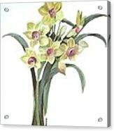 Lent Lily Acrylic Print