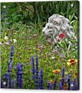 Leo In The Garden Acrylic Print