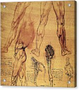 Leonardo: Legs, C1508 Acrylic Print