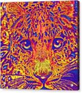 Leopard Eyes Orange Acrylic Print
