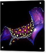 Leopard Flat Worm Acrylic Print