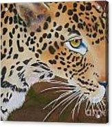 Leopard In Botswana Acrylic Print