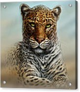 Leopard In The Mist Acrylic Print