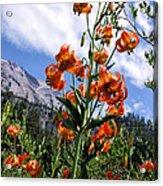 Leopard Lilies Below Lassen Peak Acrylic Print