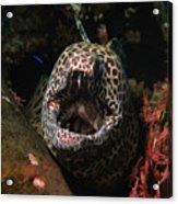 Leopard Moray Acrylic Print