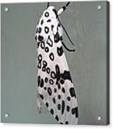Leopard Moth Acrylic Print