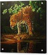 Leopard On Pond Acrylic Print