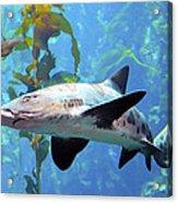 Leopard Shark Acrylic Print