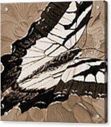 Lepidoptery - Sepia Acrylic Print