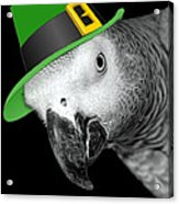 Leprechaun Parrot Acrylic Print