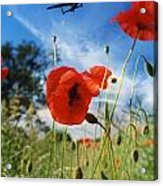 Lest We Forget Acrylic Print