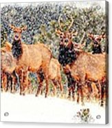 Let It Snow - Barbara Chichester Acrylic Print