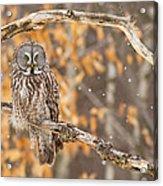 Let It Snow Let It Snow Let It Snow Acrylic Print