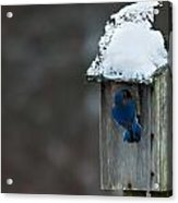 Let Me In Its Cold Acrylic Print