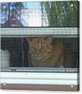 Let Me Out Cat Picture Acrylic Print