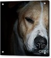Let Sleeping Dogs Lie. Acrylic Print